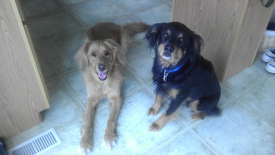 Our pups' worlds collided, too! And now they are brothers. :)